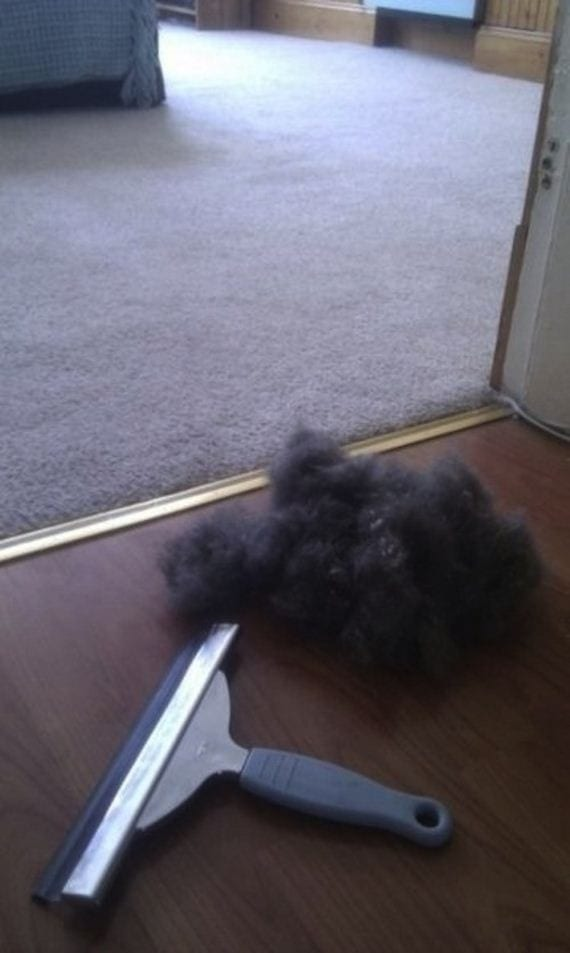 how to get pet hair out of carpet