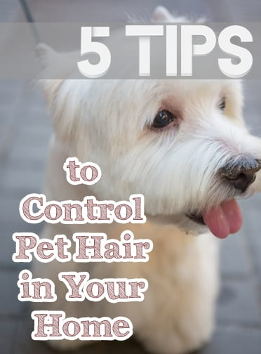 Controlling pet hair, how to control pet hair, pet hair, popular pin, cleaning, cleaning hacks, how to keep a clean house, clean house hacks, pet hacks, living with pets.