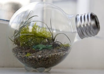 These adorable DIY terrariums are so cute and you will love the way they look in your home. This light bulb terrarium is my favorite!