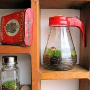 These adorable DIY terrariums are so cute and you will love the way they look in your home. This syrup dispenser terrarium is my favorite!