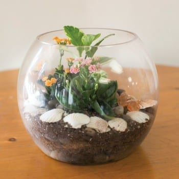 These adorable DIY terrariums are so cute and you will love the way they look in your home. This fish bowl terrarium is my favorite!