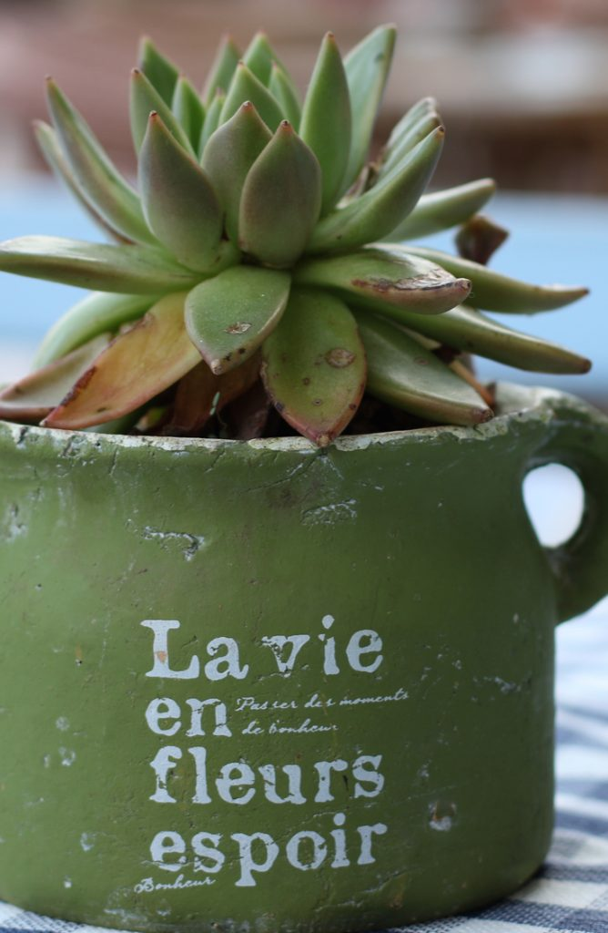 succulent vases-easy crafts that pay big