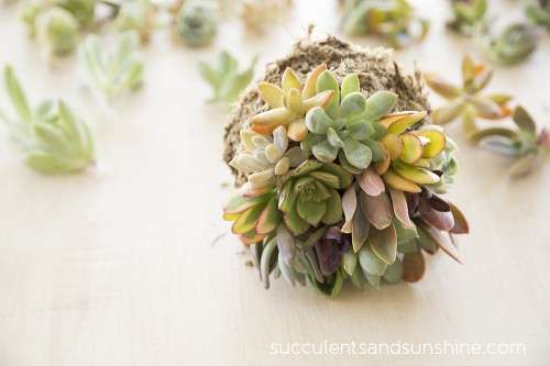 10 Succulent Themed Craft Projects, Succulents, Decorating with Succulents, How to Decorate With Succulents, Succulent Care, Succulent Care Hacks, Succulent Care Tips, Growing Succulents Indoors