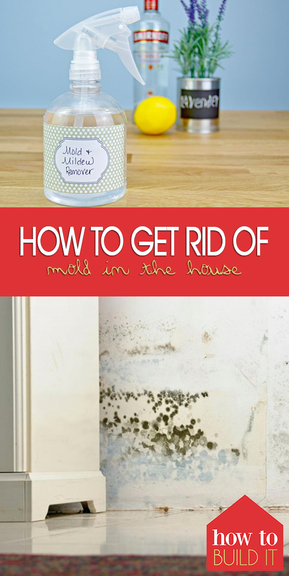 How to Get Rid of Mold In the House | Remove Mold, Mold REmoval, Mold Remover Walls, Mold Remover On Wood, Mold Remover Fabric, Cleaning, Cleaning Hacks