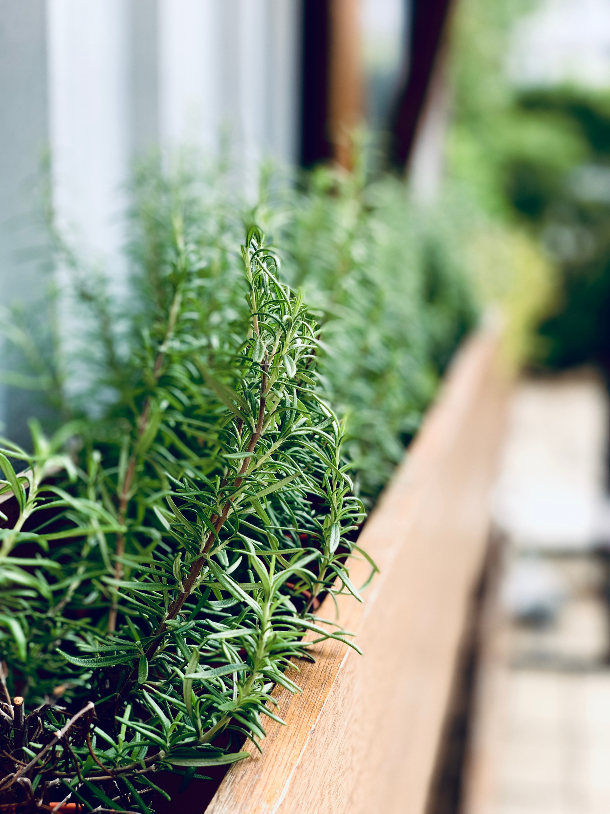 DIY planter boxes | planter box | planter boxes | DIY | garden | yard | DIY planter box ideas | planter box ideas | how to