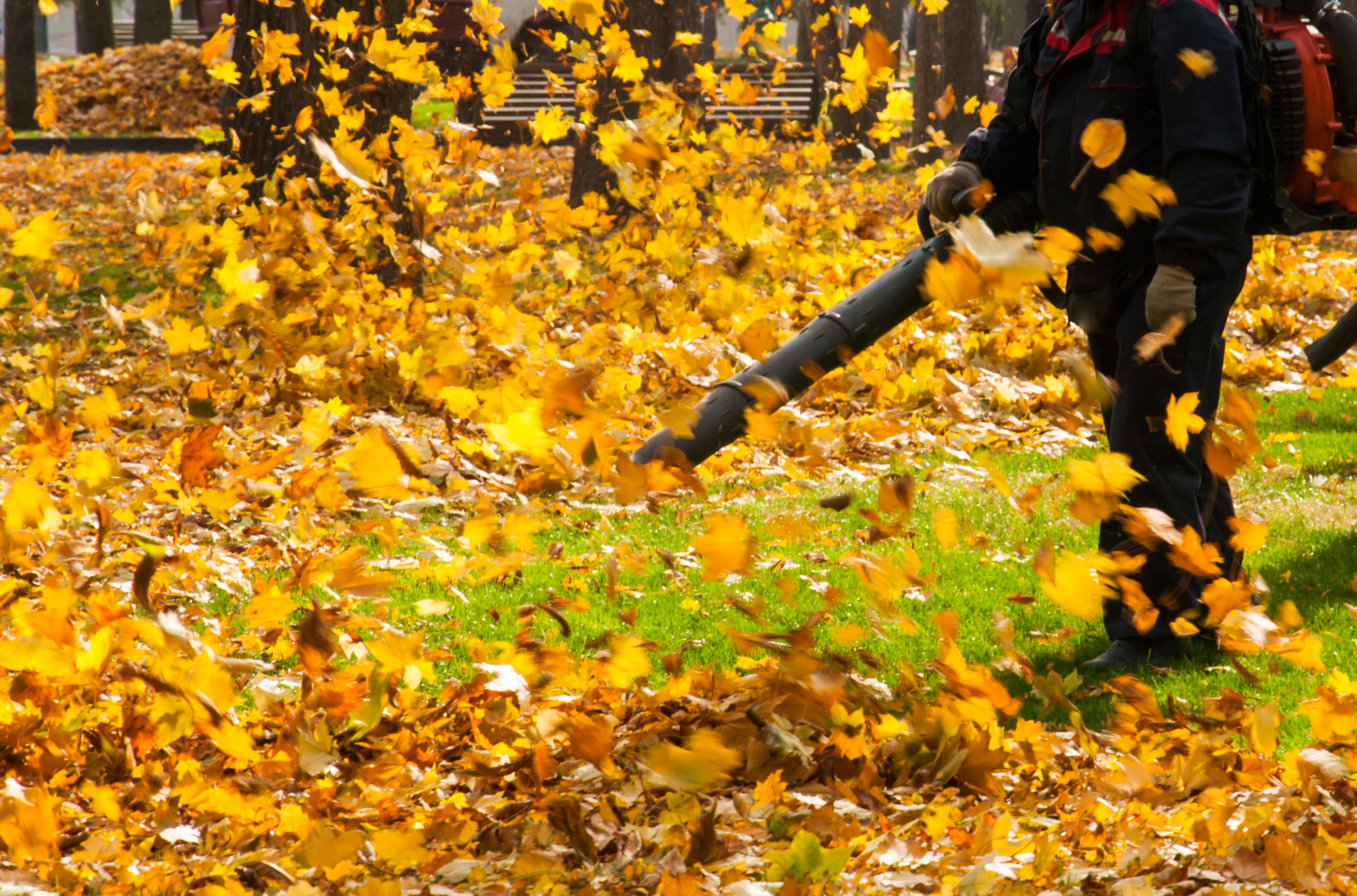 leaf | leaf clean up | fall clean up | home maintenance | fall home maintenance | leaves