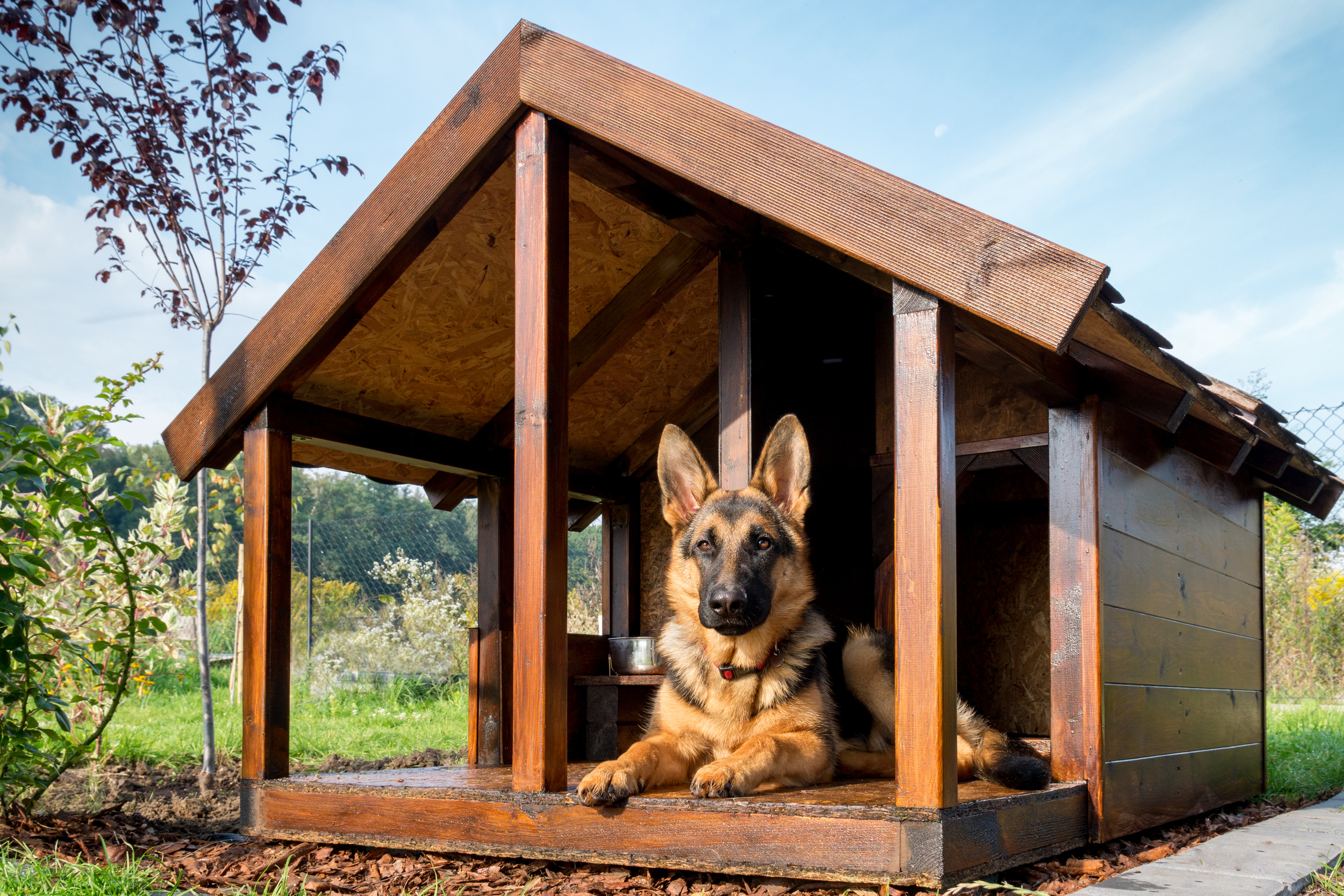 DIY dog house | DIY | dog house | DIY project | easy DIY dog house | dog house tutorial | how to